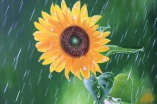 vẽ tranh tường hoa hướng dương
